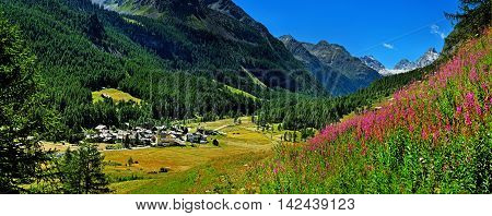 panorama view above on Rhemes Notre Dame with willow herb in Gran Paradiso National Park