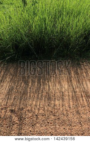 green grass and shadow abstrct contrast texture background