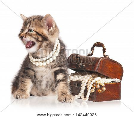 Cute little kitten protects a wooden chest with pearls isolated on white background
