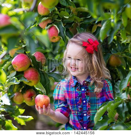Child picking apples on a farm in autumn. Little girl playing in apple tree orchard. Kids pick fruit in a basket. Toddler eating fruits at fall harvest. Outdoor fun for children. Healthy nutrition.
