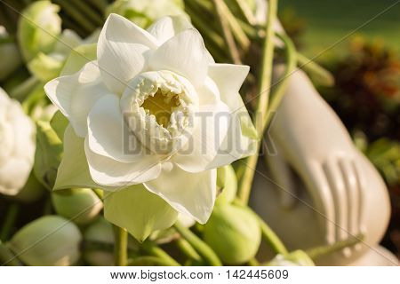 White lotus flower; The lotus is one of the most well-known symbols of Buddhism. White Lotus this represents the state of spiritual perfection and total mental purity.