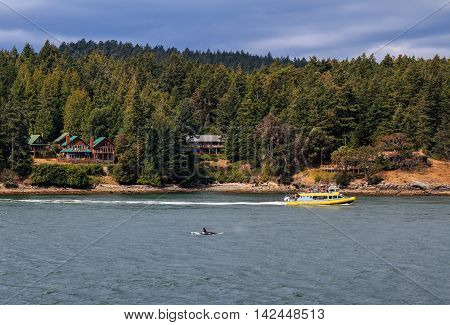 GULF ISLANDS BRITISH COLUMBIA CANADA - AUGUST 07 2016: Whale watching tour on Gulf Islands on August 07 2016.