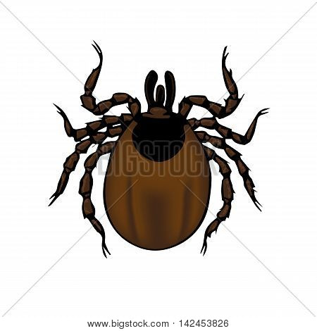 Ixodes tick. the anatomical structure of the insect. icon. isolate