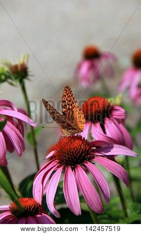 Beautiful image with butterfly poised on wildflowers in the garden.