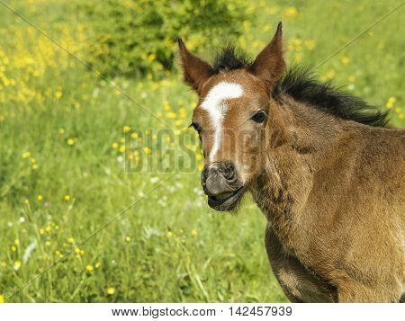 light brown colt with short mane stands on the field on the green grass