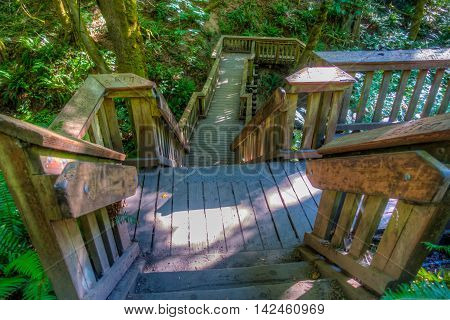 A view from above wooden stairs on a trail at Saltwater State Park in Washington State.