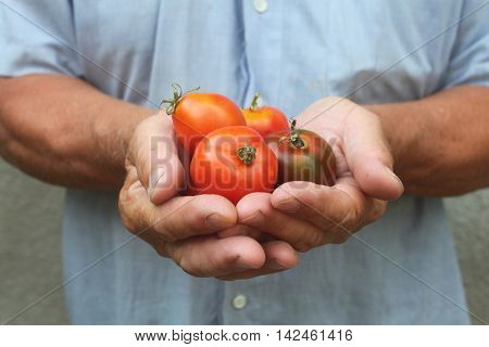 A man holding a tomato, close-up A man holding a tomato, close-up
