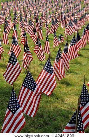 Beautiful scene with small American flags set across open field