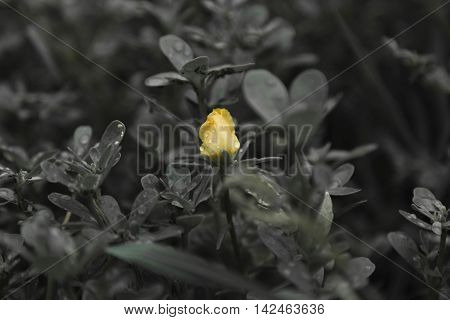 Small Yellow Flower