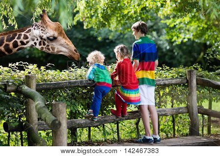 Group of children school student little toddler boy and preschool girl watching and feeding giraffe animals at the zoo on sunny summer day. Wildlife experience for kids at animal safari park.