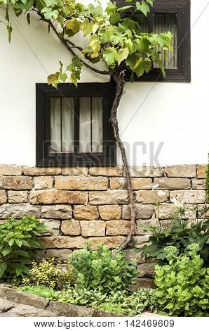 Wooden windows of old rural house wall with vegetation
