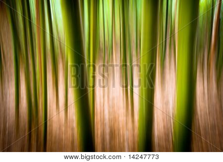 Abstract Nature Landscape Background Motion Blur Effect Bamboo Forest Texture