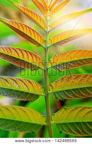 Closeup on wild plant with symmetric textured leaves