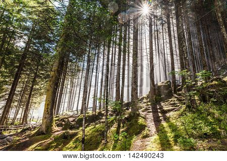 Forest With Sun Rays