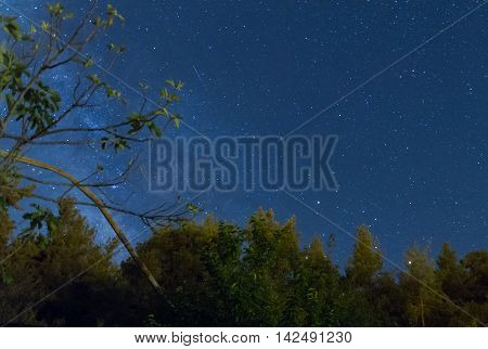 Milky Way Over The Forest At The Troodos Mountains
