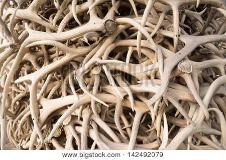 HUndreds of Elk antlers all arranged together as an arch