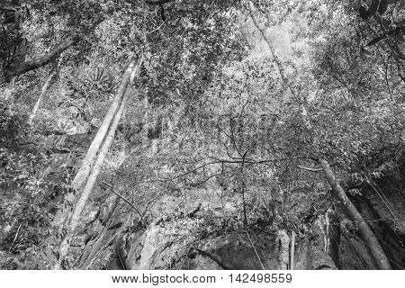Abstract background Monochrome Forest tree : picture Style Dynamic smooth.