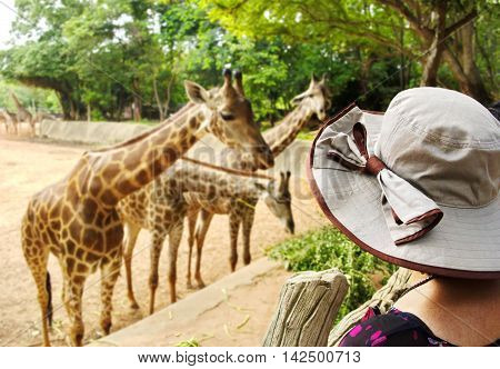 Women looking giraffe at the zoo. (Korat zoo in Thailand)