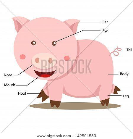 Illustrator of pig body part for education
