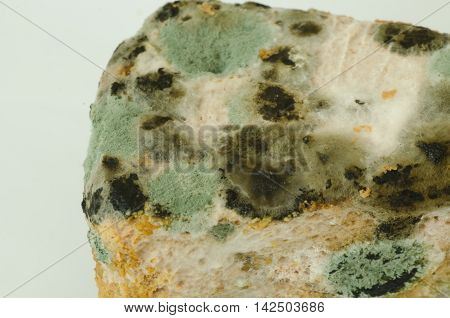 Close up of mold growing on cake in green and white spores