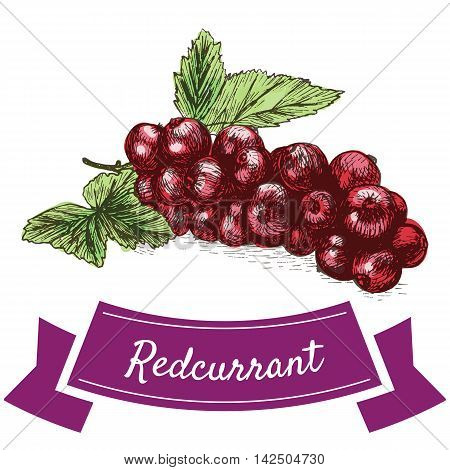 Vector illustration colorful set with redcurrant. Illustration various of vegetables on white background