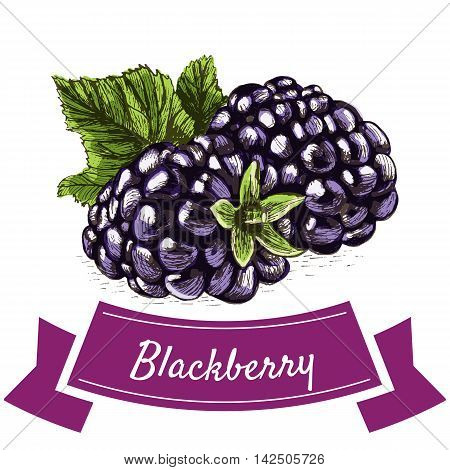 Vector illustration colorful set with blackberry. Illustration various of vegetables on white background