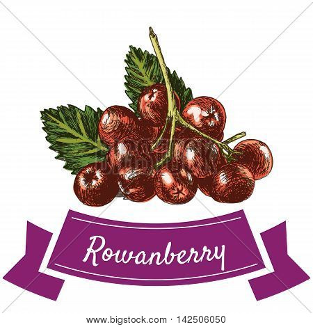 Vector illustration colorful set with rowanberry. Illustration various of vegetables on white background