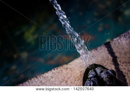 .fountain Frog