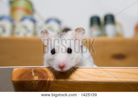 Hamster In Larder