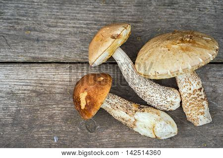 Eatable Mushrooms On A Wooden Table With Copy Space
