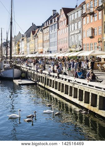 COPENHAGEN, DENMARK - JULU 21: Mute swan brood and people in Nyhavn, Copenhagen at July 21, 2016
