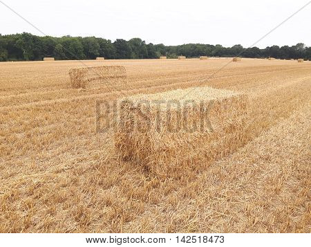 Hay bales in summer, Sussex, England August