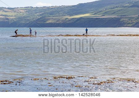 ROBIN HOODS BAY ENGLAND - AUGUST 12: Various people and a dog on a sandbank out in the sea. In Robin Hoods Bay North Yorkshire England. On 12th August 2016.