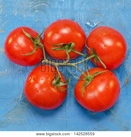 Ripe, red tomatoes on branch, blue background