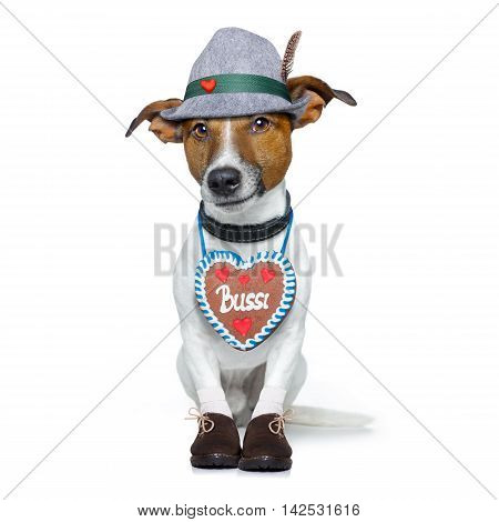 bavarian german jack russell dog with gingerbread and hat isolated on white background ready for the beer celebration festival in munich