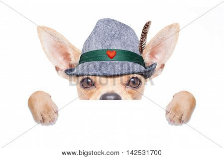bavarian german chihuahua dog with hat with blackboard or placard banner isolated on white background ready for the beer celebration festival in munich