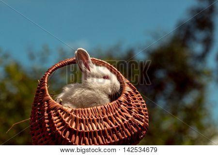 Adorable Rabbit Pet