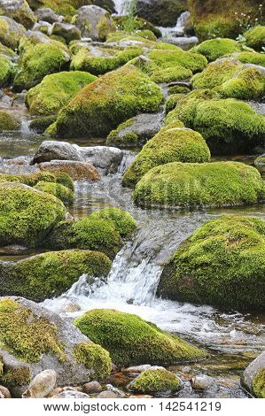 Water flowing over stones overgrown with moss. A mountain stream at the foot of the Tatra Mountains. Vertical shot.