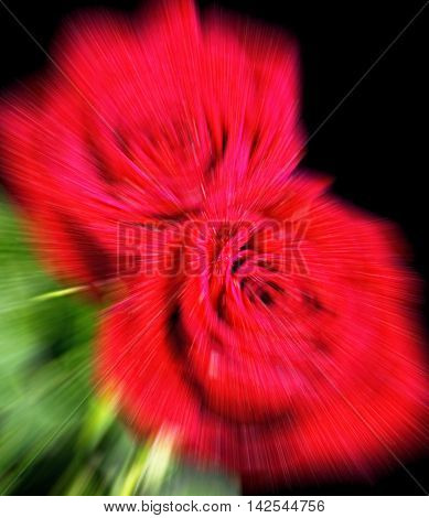 Blurred background of red roses with room for your type.
