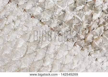 Illustration of fish skin or scales closeup