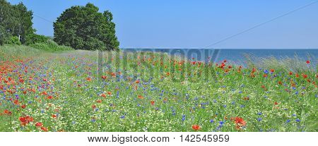 Springtime on Ruegen Island in Moenchgut Biosphere Reserve,baltic Sea,Mecklenburg western Pomerania;Germany