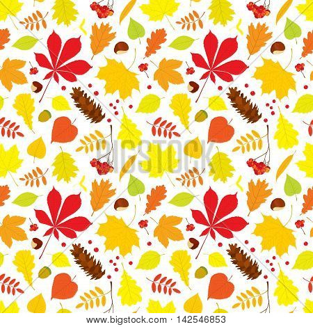 Autumn seamless pattern of different tree leaves - oak, chestnut, birch, Rowan, linden, jasmine, lilac, maple, willow, poplar, sycamore, Rowan berry bunch, acorn, pine cone on white background.