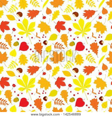 Autumn seamless pattern of different tree leaves - oak, chestnut, birch, Rowan, linden, jasmine, lilac, maple, willow, poplar, sycamore, Rowan berries, acorns, nuts on white background.