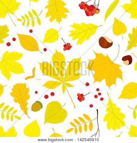 Autumn seamless pattern of different tree leaves - oak, chestnut, birch, Rowan, linden, jasmine, lilac, maple, willow, poplar, sycamore, Rowan berry bunch, acorns, nuts on white background.