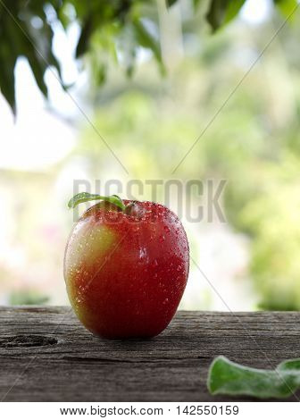 close up view of nice fresh apples on color background