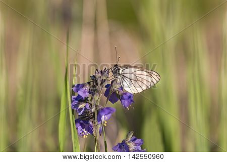 white butterfly sitting on purple flowers on blurred background