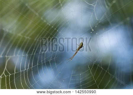 Spider sitting in center of the web covered with water droplets