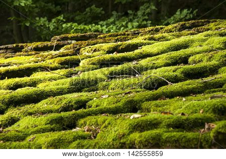 Stone roof slabs of old country house in forest overgrown with green moss closeup