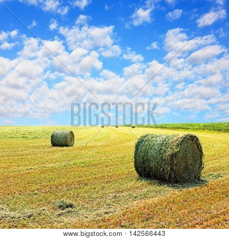 Golden stubble field and hay bales against blue cloudy sky.