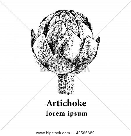 Vector hand drawn artichoke illustration. Food collection
